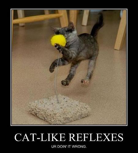 reflexes in babies. Reflexes