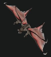 Hunter PvP Pet - Bat